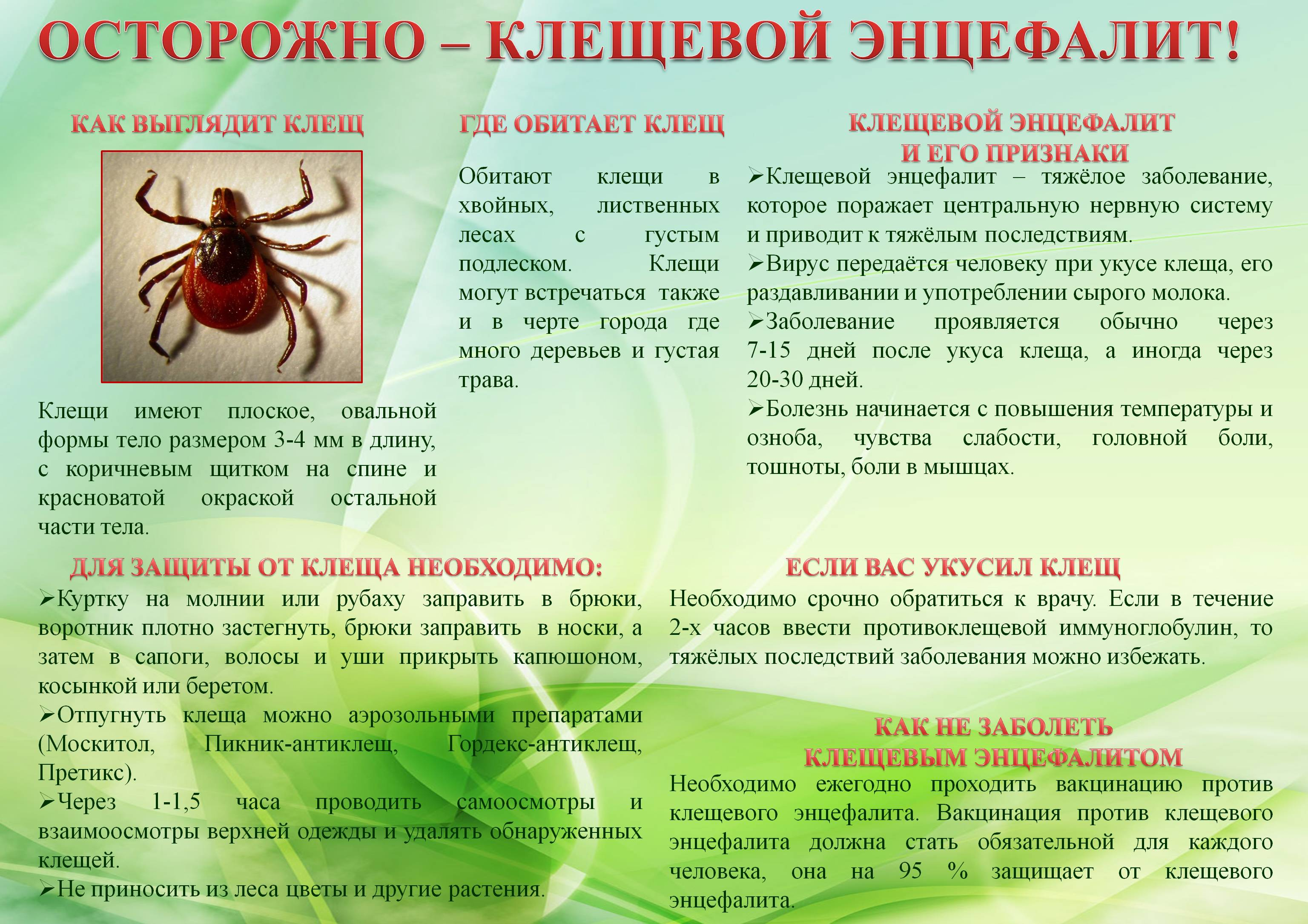 1525634408_kleschi-a1